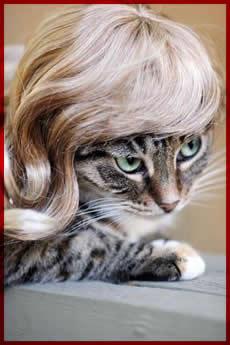 猫用のカツラ