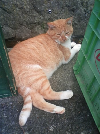 善光寺の露店にいたネコ